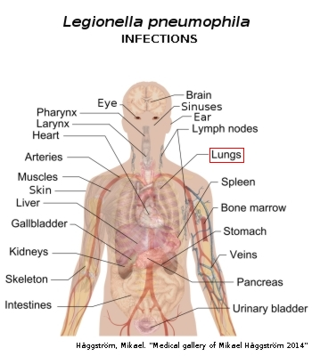 list of gram positive bacteria and their diseases pdf